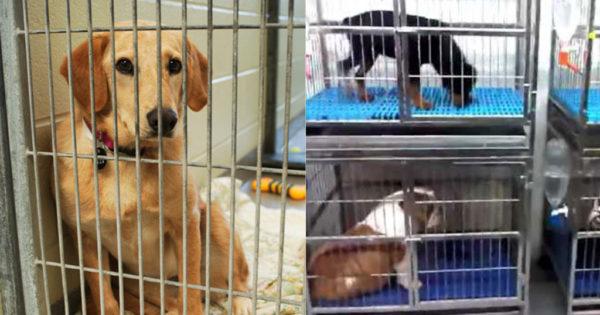 Η Βρετανία απαγόρευσε την πώληση σκυλιών και γατιών από τα Pet shop