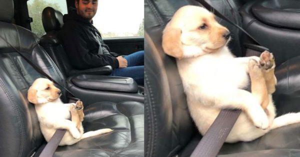 Σκύλος φόρεσε ζώνη ασφαλείας και η φωτογραφία έλιωσε το ίντερνετ