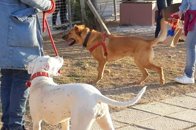 πάρκο σκύλων Ηράκλειο