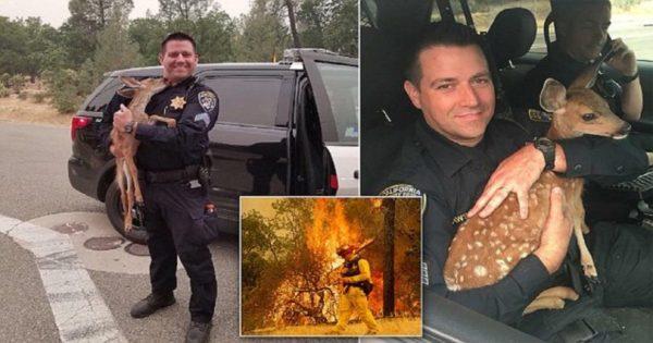 Μωρό ελαφάκι δίνει γλυκό φιλί στον πυροσβέστη που το έσωσε από τη φονική πυρκαγιά στην Καλιφόρνια
