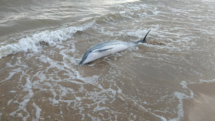 dolphin-696x392