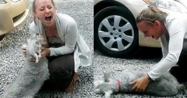 Σκύλος λιποθύμησε από την χαρά του όταν γύρισε σπίτι η ιδιοκτήτριά του μετά από 2 χρόνια