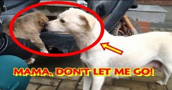 Μαμά σκυλίτσα δίνει αποχαιρετιστήριο φιλί στο κουτάβι της που υιοθετήθηκε και φεύγει σε νέα οικογένεια