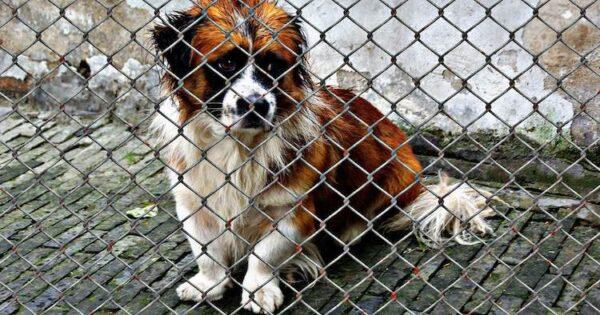 Κορυφαίοι 10 λόγοι για να υιοθετήσετε ένα σκυλί σε καταφύγιο