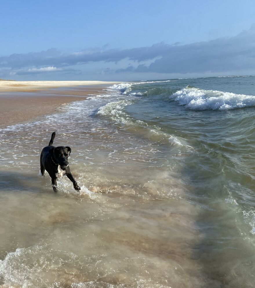Two-Rescues-Get-a-Well-deserved-Beach-Day-61410b4cb6336__880