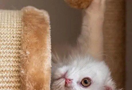 21 παιχνιδιάρικες γατίσιες ράτσες (με φωτογραφίες)