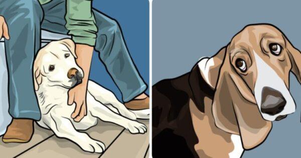 Σκύλος Στο Σπίτι: Ο Λόγος Που Μας Ακολουθεί Παντού