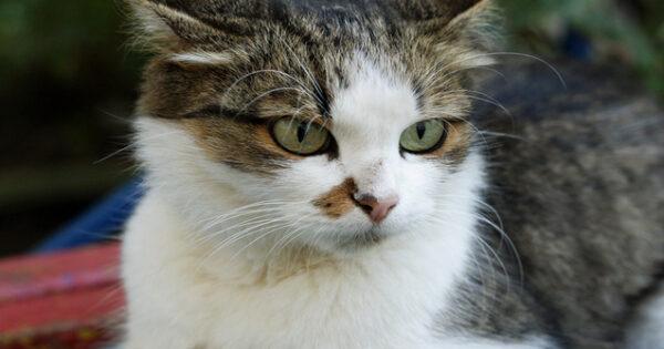 Τι δεν γνωρίζετε για το λειχήνα στις γάτες!