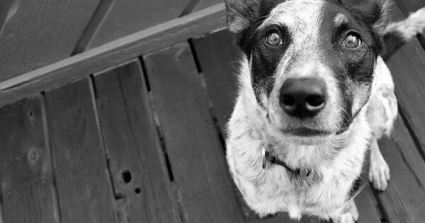 Γιατί και σε ποια ηλικία το τρίχωμα του σκύλου σας θα αποκτήσει γκρι χρώμα;
